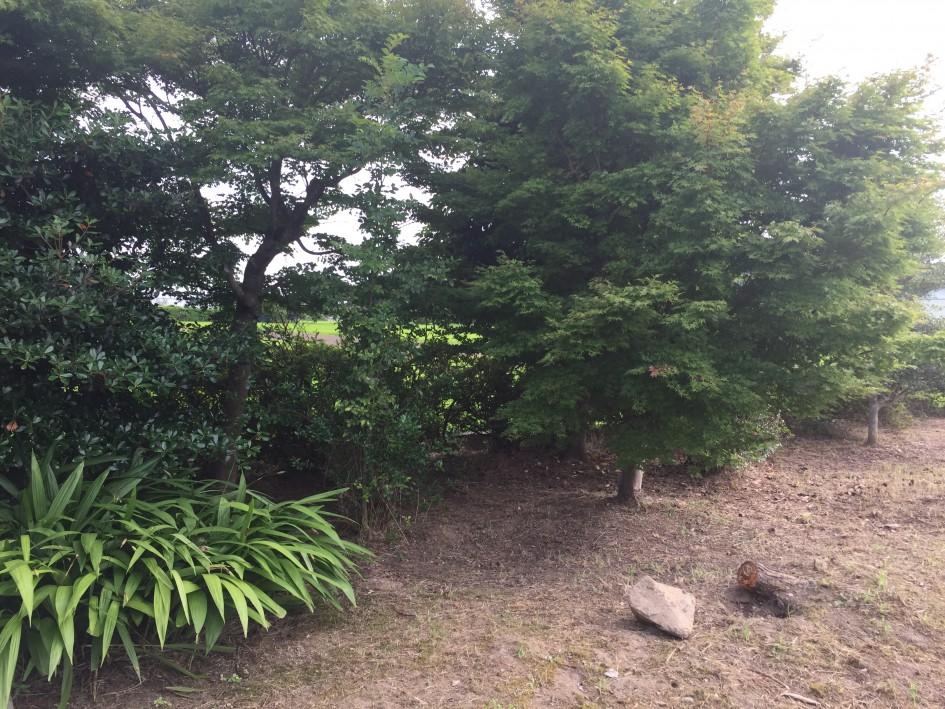 わが家の庭の一角。 草むしりが地獄のようです。 ハァハァ…。