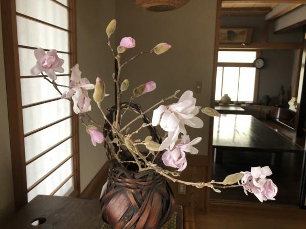 梅と桜の間で地味に咲いているコブシの花も美しいですよ。